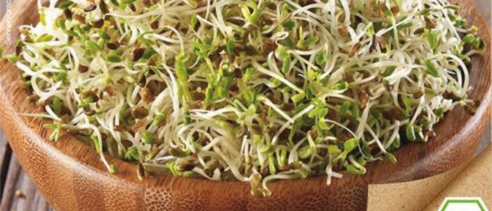 Zdravá naklíčená semena