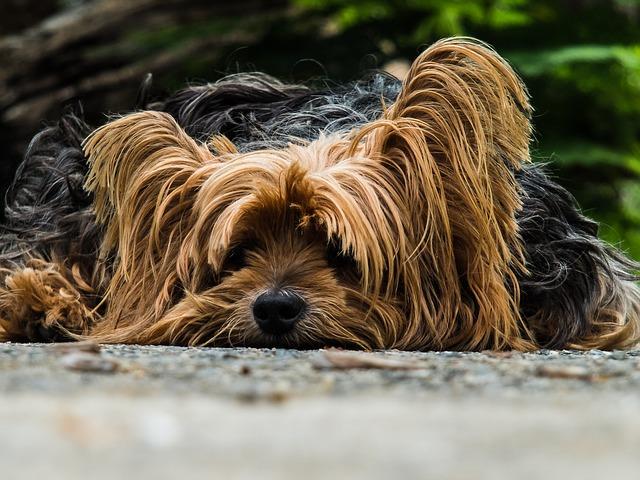 Jak vybrat ten správný pelíšek pro psy