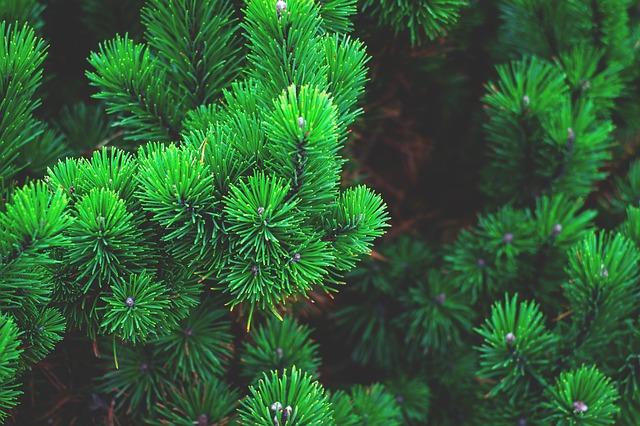 www.okrasne-stromy.cz