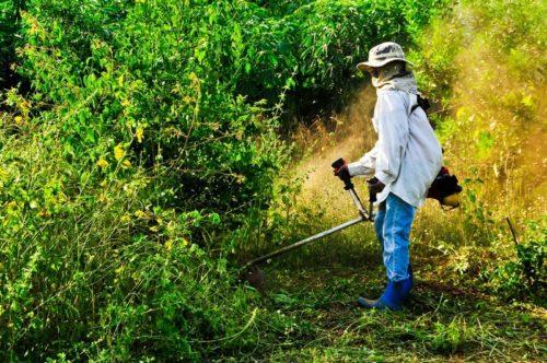 Vysoká tráva je nejrizikovější, zdroj: shutterstock.com