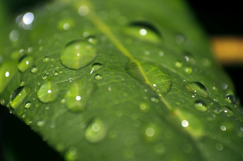 Automatické zavlažování nenechá vaši zahradu napospas suchu
